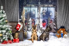 Ziemassvētku ciemiņi